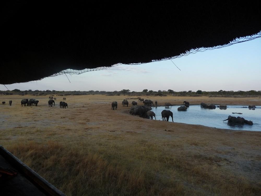 Roaming Fox Hwange elephants 26.JPG