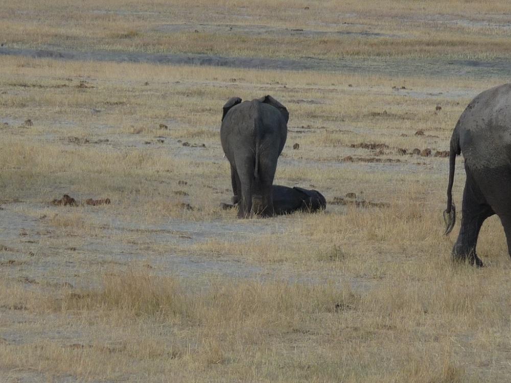 Roaming Fox Hwange elephants 28.JPG
