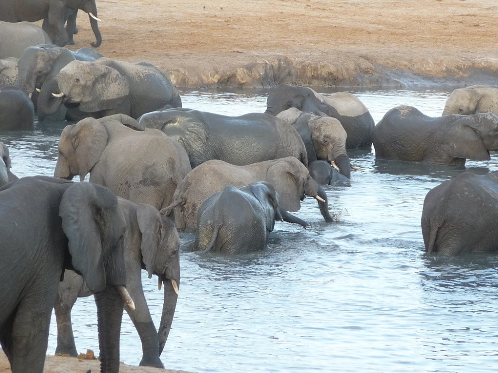 Roaming Fox Hwange elephants 31.JPG