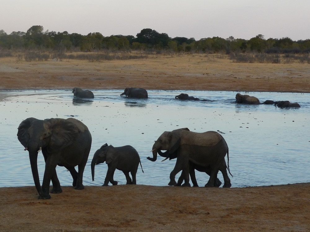 Roaming Fox Hwange elephants 35.JPG