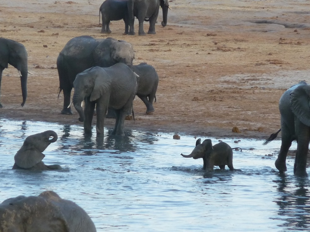 Roaming Fox Hwange elephants 36.JPG