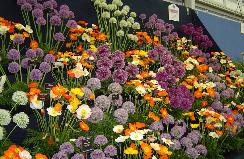 Grand Pavilion RHS Chelsea Flower Show display