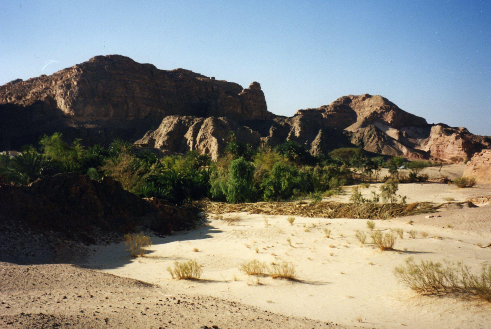 The oasis in the Sinai desert