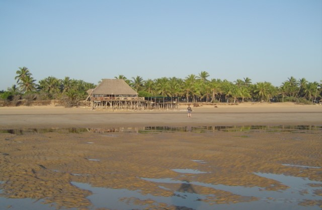 Restaurant on the beach and Barra Reef Accommodation hidden in the palm trees