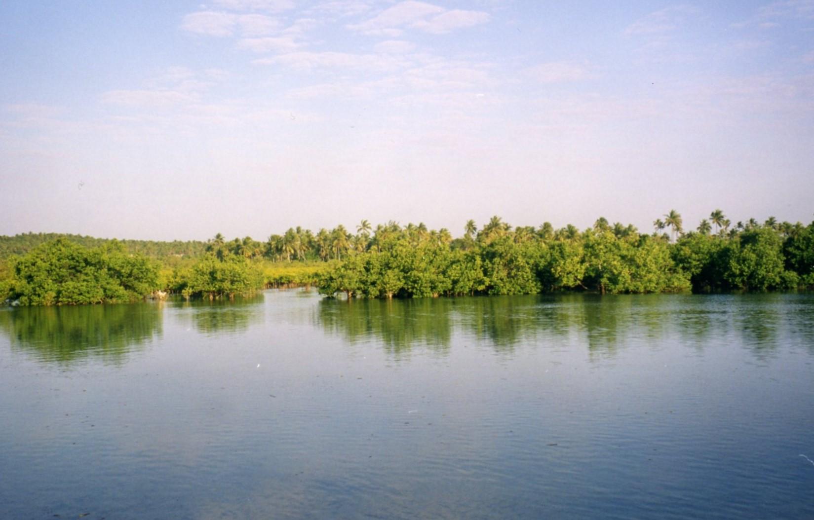 Mangrove swamps and estuary near Inhambane.jpg