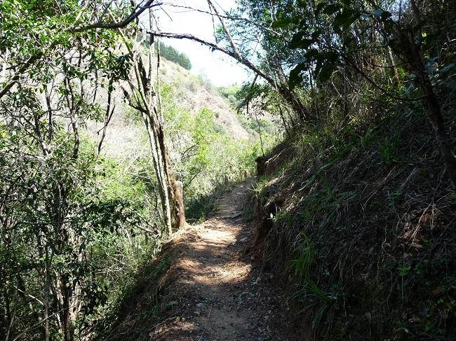 Path Magoebaskloof zipline.JPG