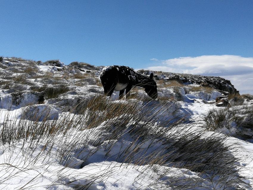 Donkey in snow SaniPass www.3kids2dogsand1oldhouse.co.za.jpg