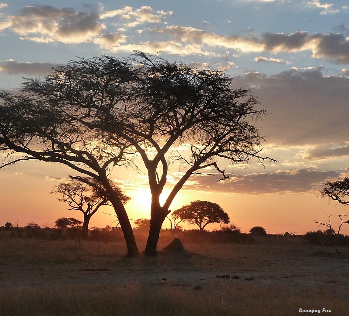 The sun peeping through the trees in Hwange, Zimbabwe