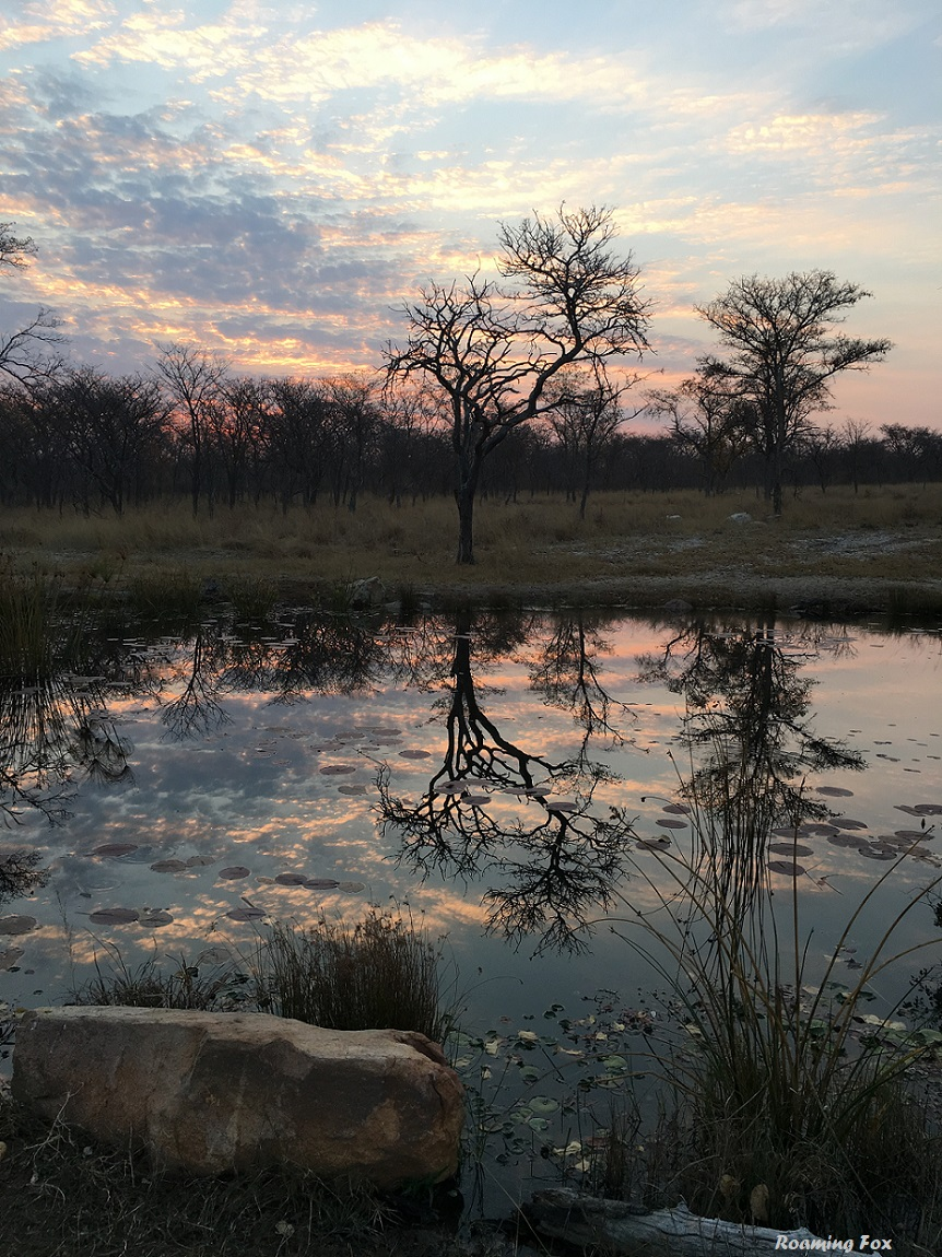 Sunsets and trees make for great reflections on still water - Waterberg, South Africa