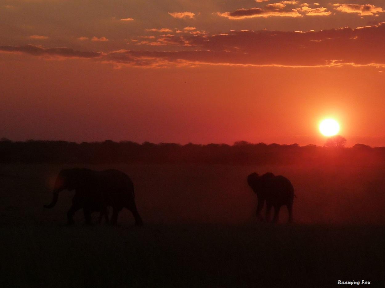 Elephants & sunset Hwange Zimbabwe.JPG