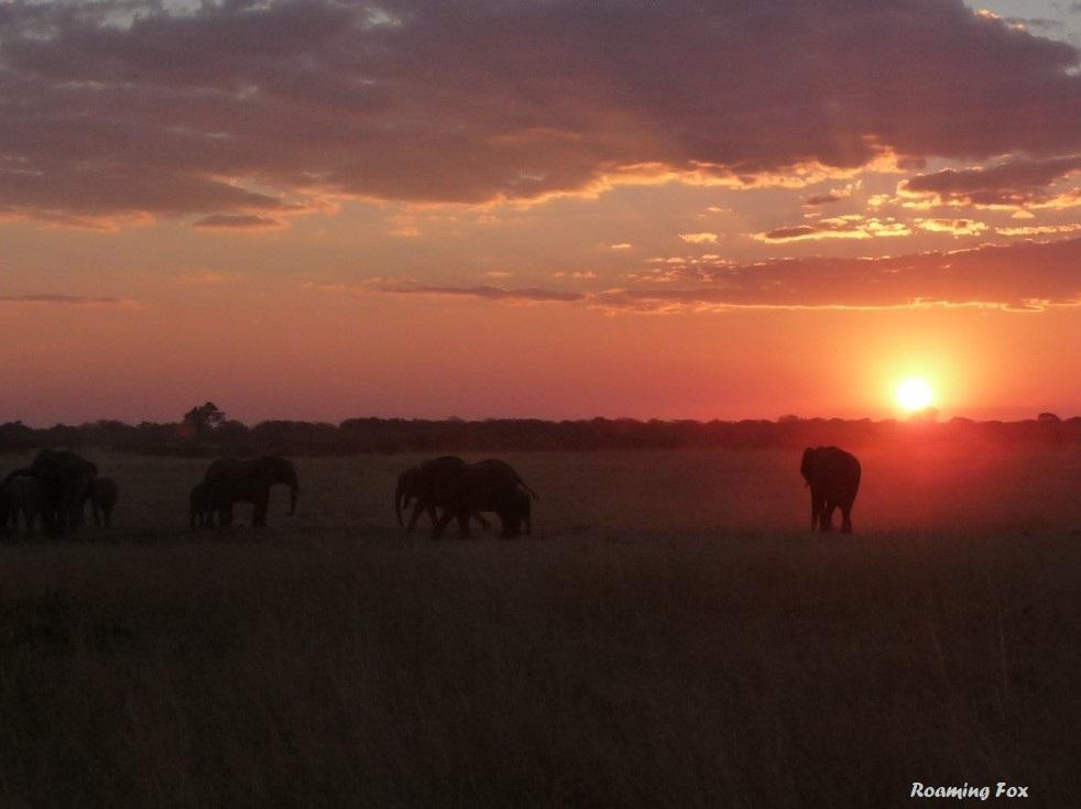 Hwange elephants sunset.JPG