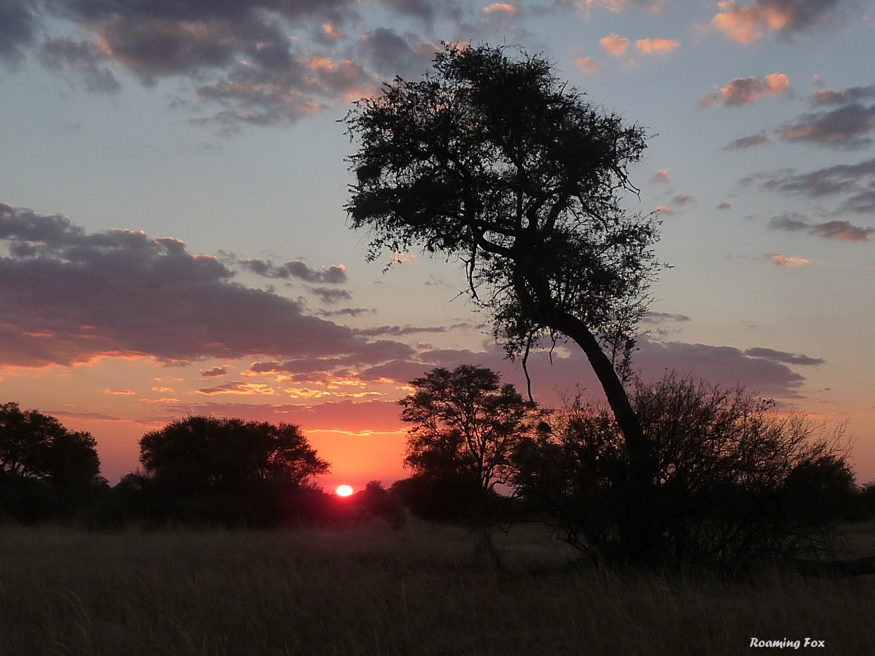 Sunset in the African bush.JPG