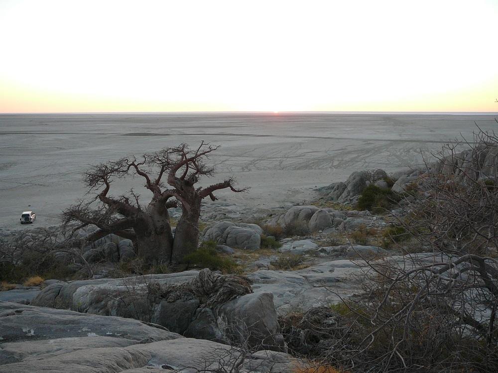 Majestic baobab on Kubu island, Makgadikgadi Pans, Botswana