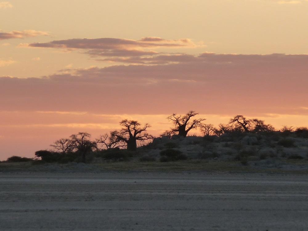 Sunset, baobabs & Kubu island. Isn't nature wonderful?