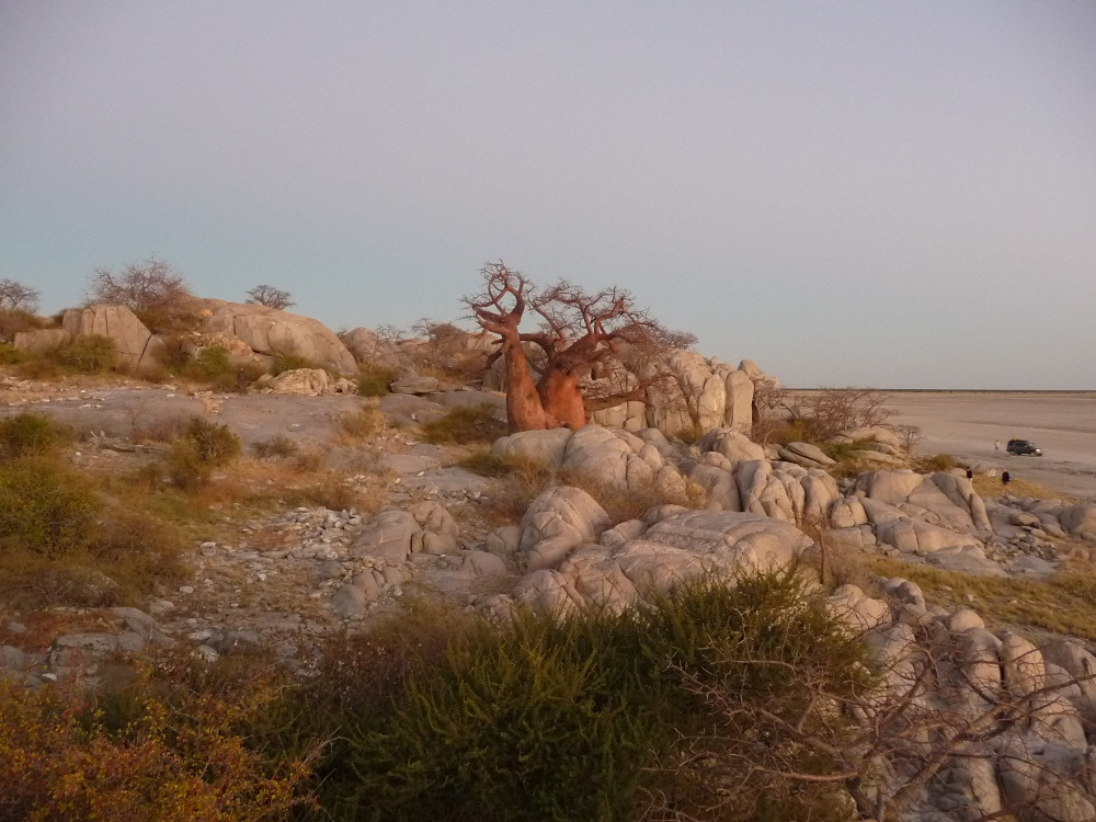 www.roaming-fox.com Early light Kubu island Mkgadikgadi.JPG