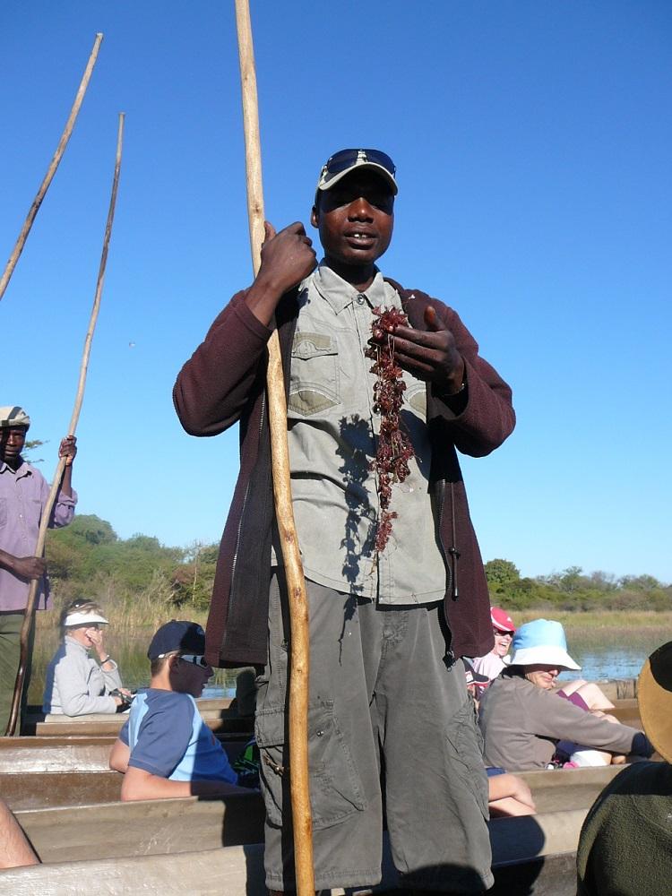 Mokoro oarsmen aquatic plants Okavango.JPG