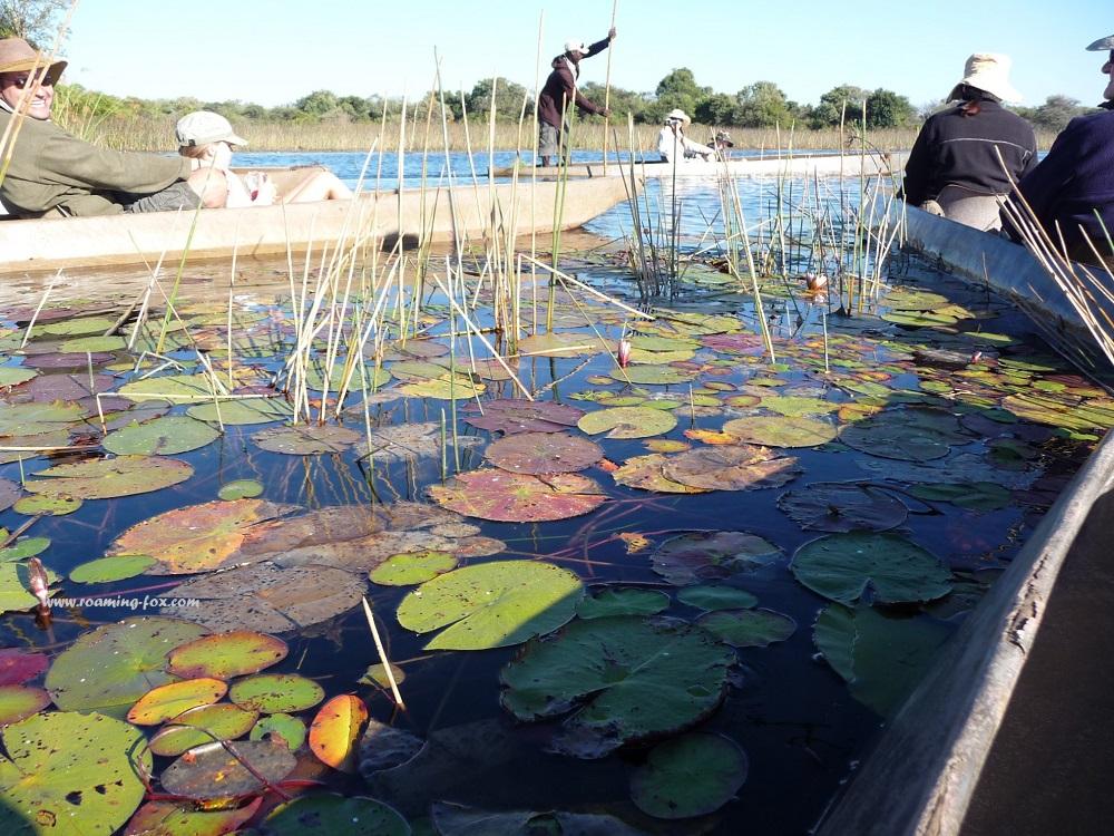 www.roaming-fox.com Okavango Delta Aquatic plants.JPG