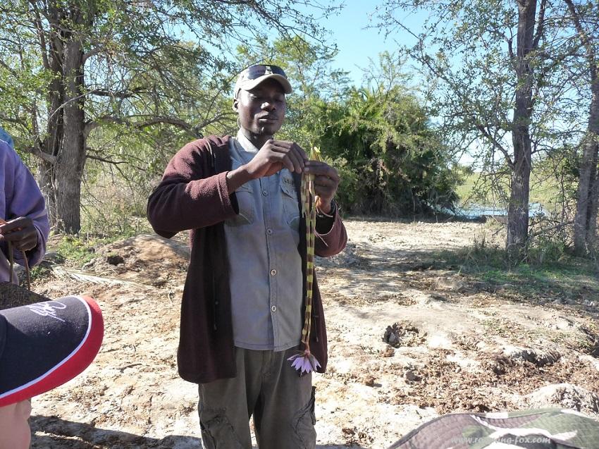 www.roaming-fox.com demonstration aquatic plants Okavango.JPG