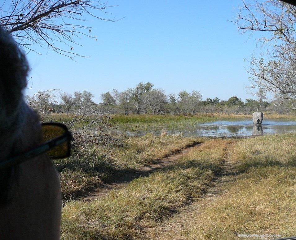 www.roaming-fox.com elephant in water Moremi