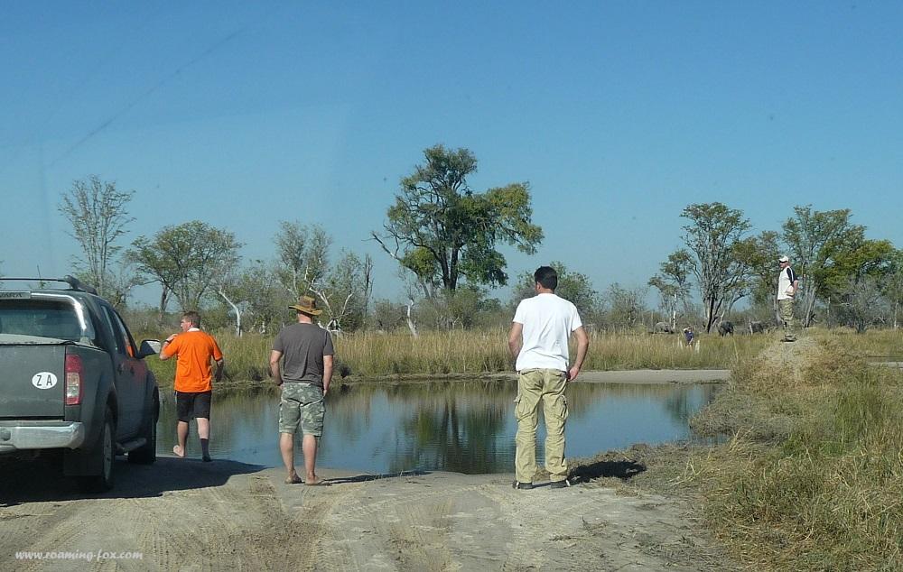 www.roaming-fox.com water crossing Moremi.JPG