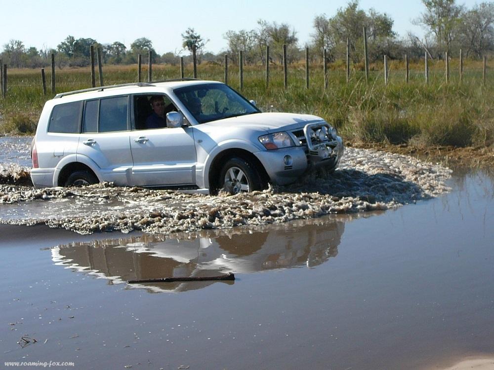 Water crossing Moremi Botswana (2).JPG