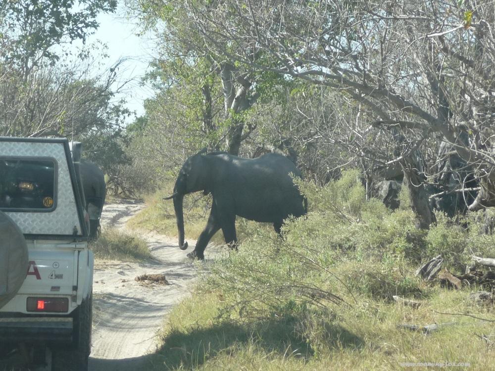 www.roaming-fox.com Elephant (2).JPG