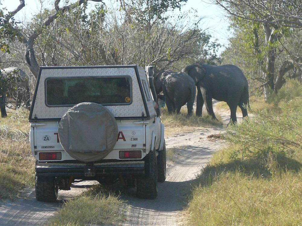 Elephant road block