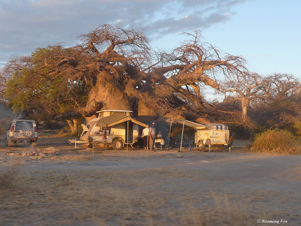 Best tree to camp under at Kubu island, Makgadikgadi Pans, Botswana. Beautiful spot taken by other campers