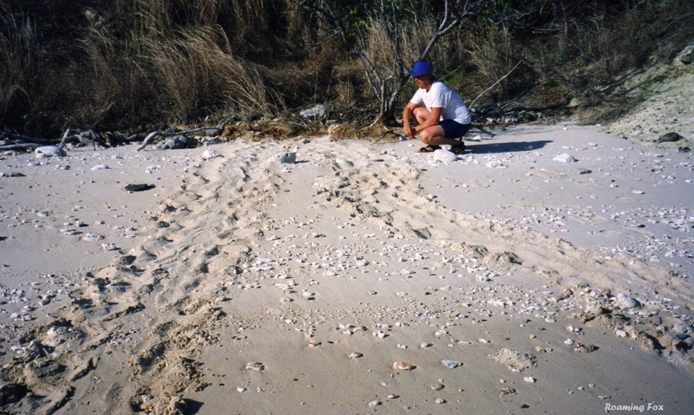Turtle tracks on one of the islands