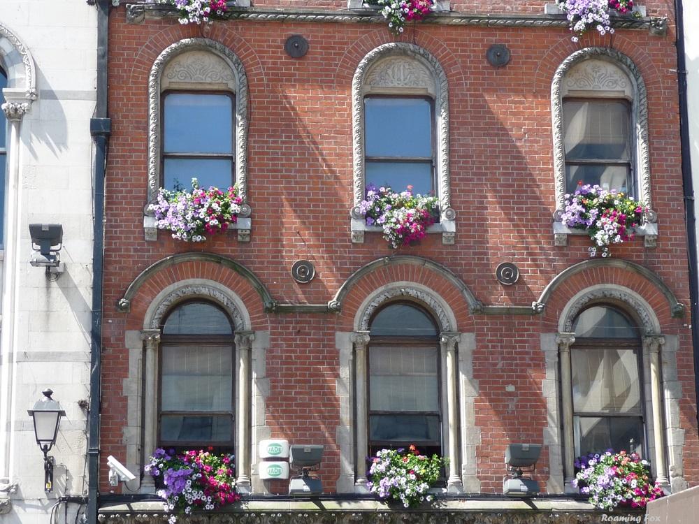 Flowers in Dublin window boxes or baskets.JPG