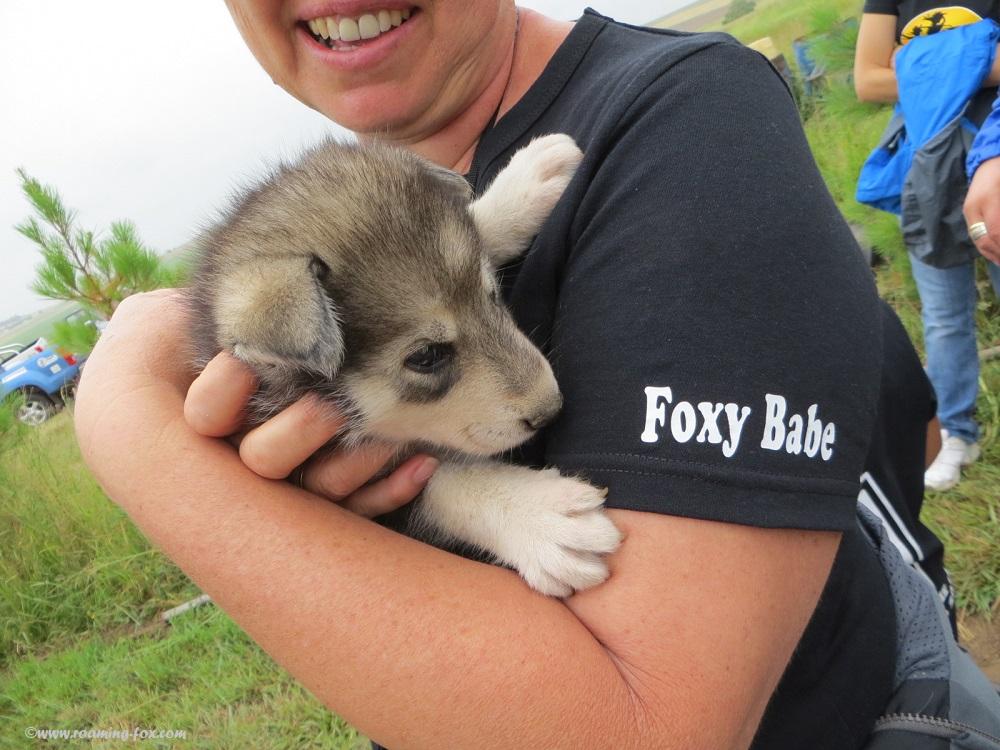 Pup held at Romi Husky Reitz
