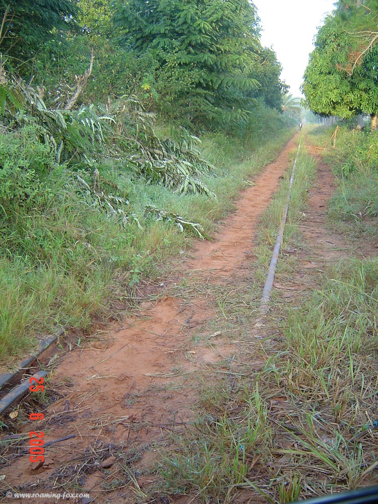 Railway line disappearing in the tropical growth