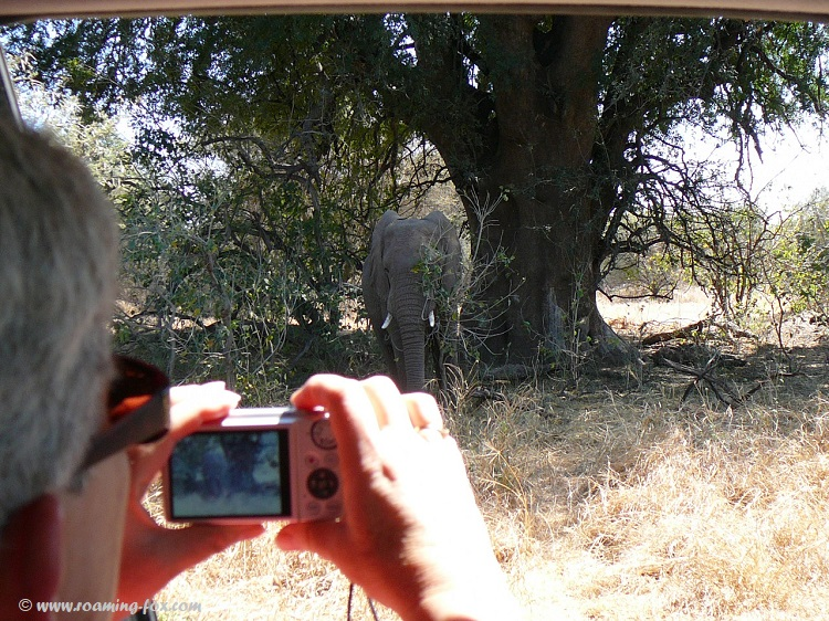 Elephant-closeup-Mapungubwe.JPG