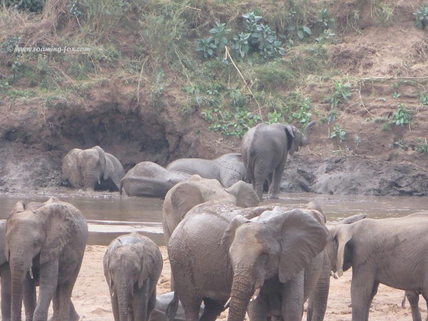 Elephants-river-Mapungubwe.JPG