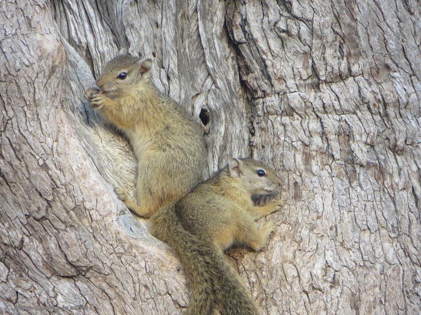 Squirrels nibbling