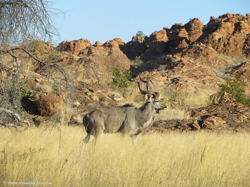 Kudu-Mapungubwe.JPG