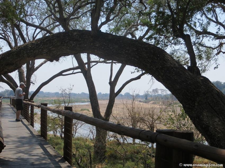 Board-walk-Mapungubwe.JPG