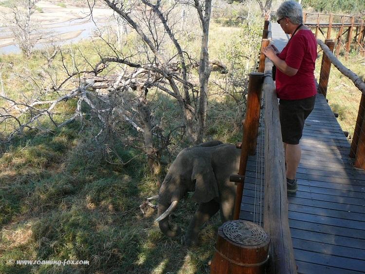 Elephant under boardwalk Mapungubwe.JPG