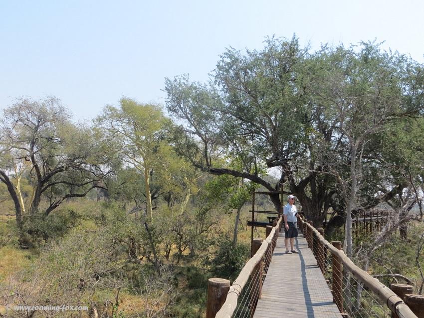 Tree-top-board-walk-Mapungubwe.JPG