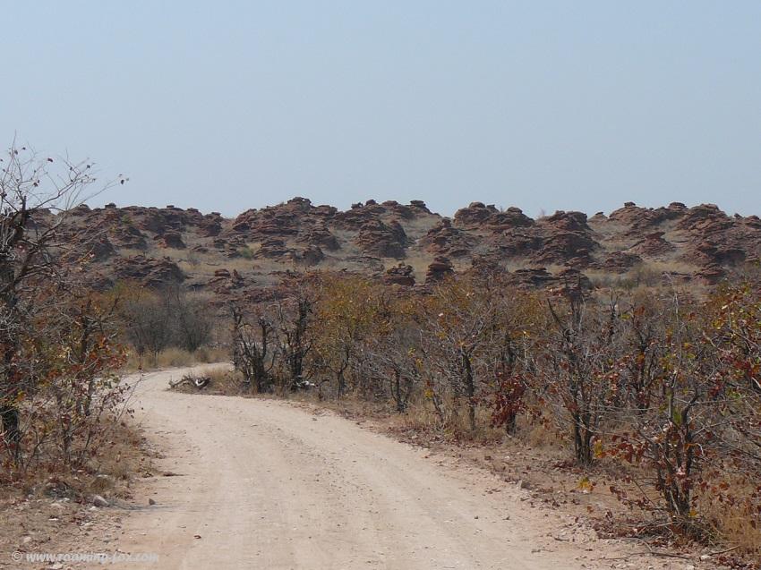 Mopani trees with beautiful rock formations at Mapungubwe
