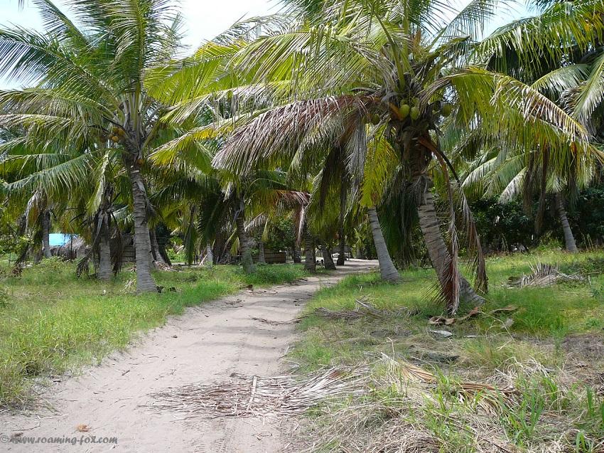 Palmtrees-Pomene-island-roamingfox-blog