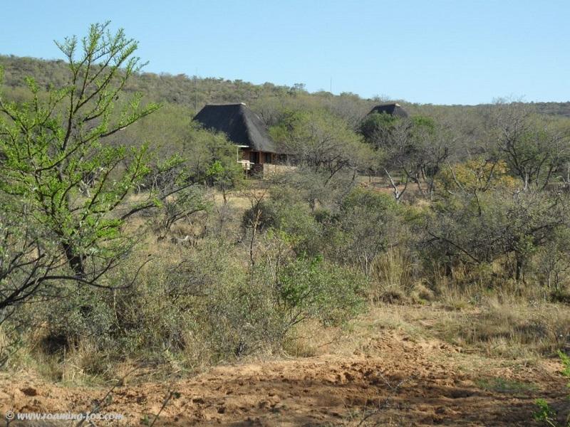 Two of the three chalets at Koshari peeping through the bushveld