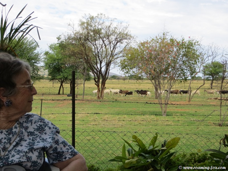 Mom looking at the goats at Geluksfontein