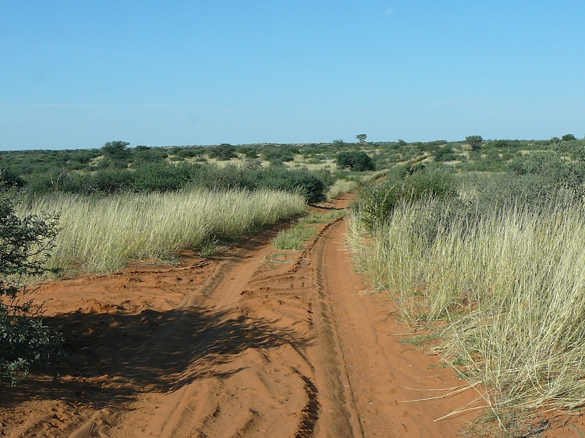 A dune road through the Kgalagadi Transfrontier Park