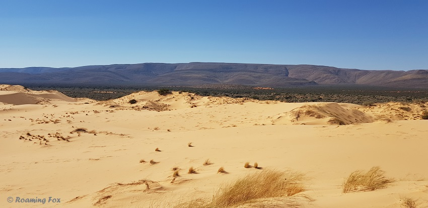 The Langberg mountains create a beautiful backdrop to the dunes