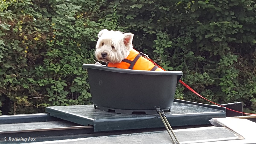 Dog-canal-boat