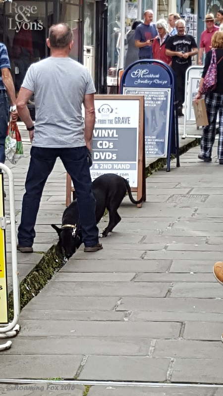 Dog drinking canal Cheap Street Frome