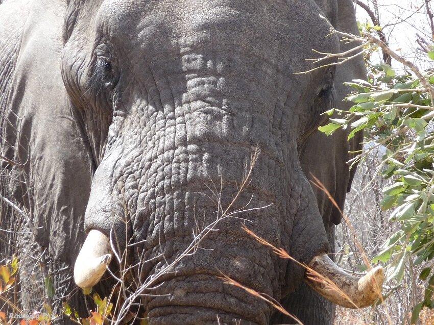 Capturing the spirit of the Kruger National Park