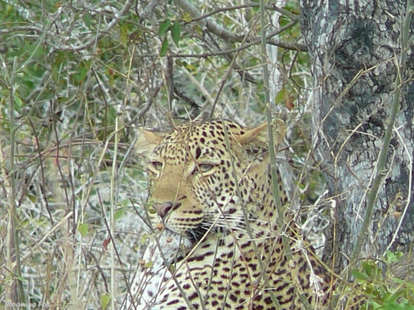 Capturing the quintessential spirit of the Kruger National Park