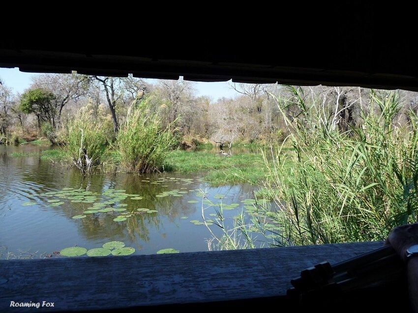 View and grey heron - birdhide Kruger National Park